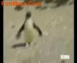 penguine Dance